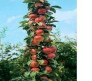 Семена Шипин Бонсай яблоня