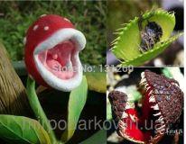 Lithops дионея цветок пожиратель мух